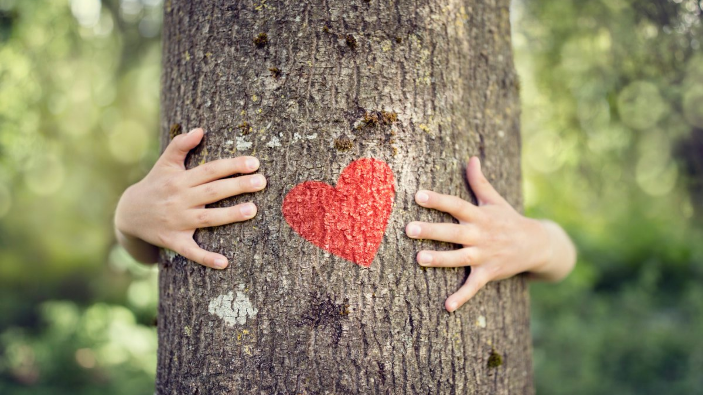 8 Ways to Love the Trees