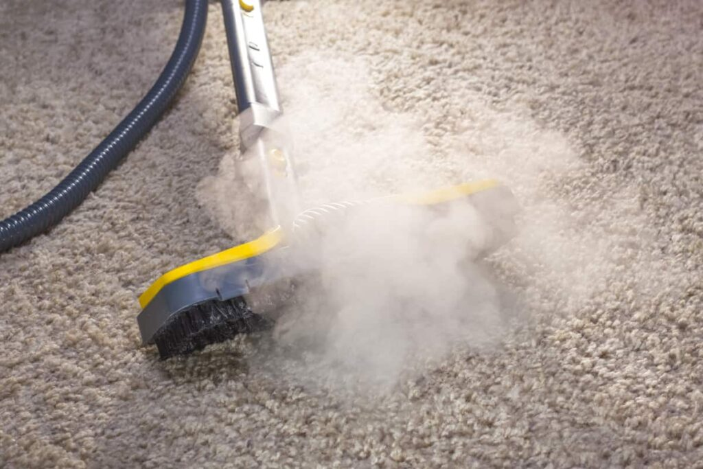 carpet steam