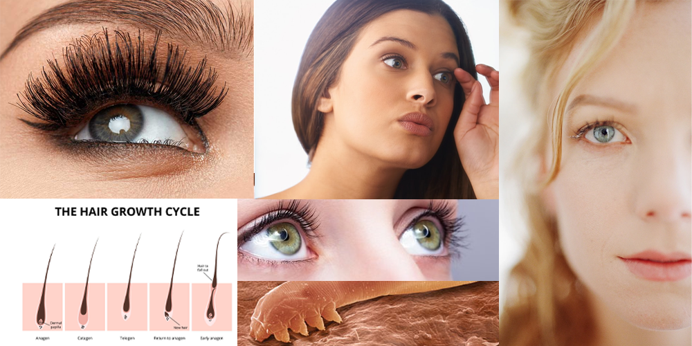 8 Facts you Almost Certainly didn't Understand Your Eyelashes!