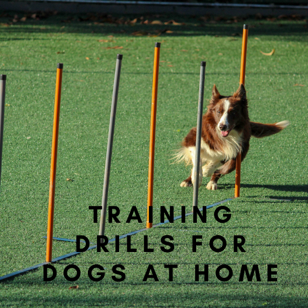 Training Drills for Dogs at Home